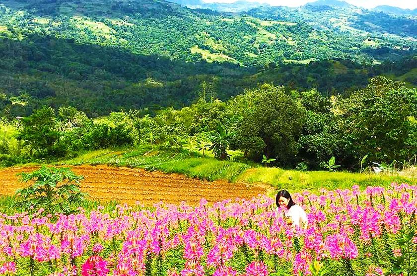 シラオガーデンの花畑