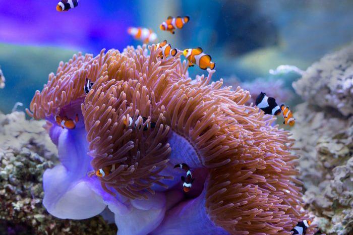 ニモとサンゴ礁が見えます