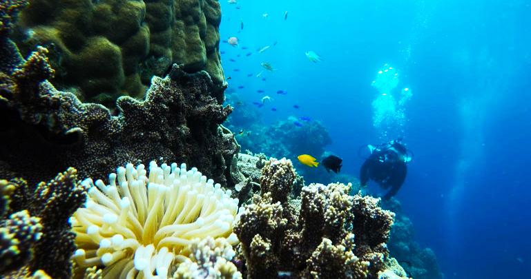 きれいな水中には、サンゴ礁や魚がいます