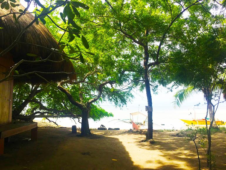 島内にはたくさんの木々があります