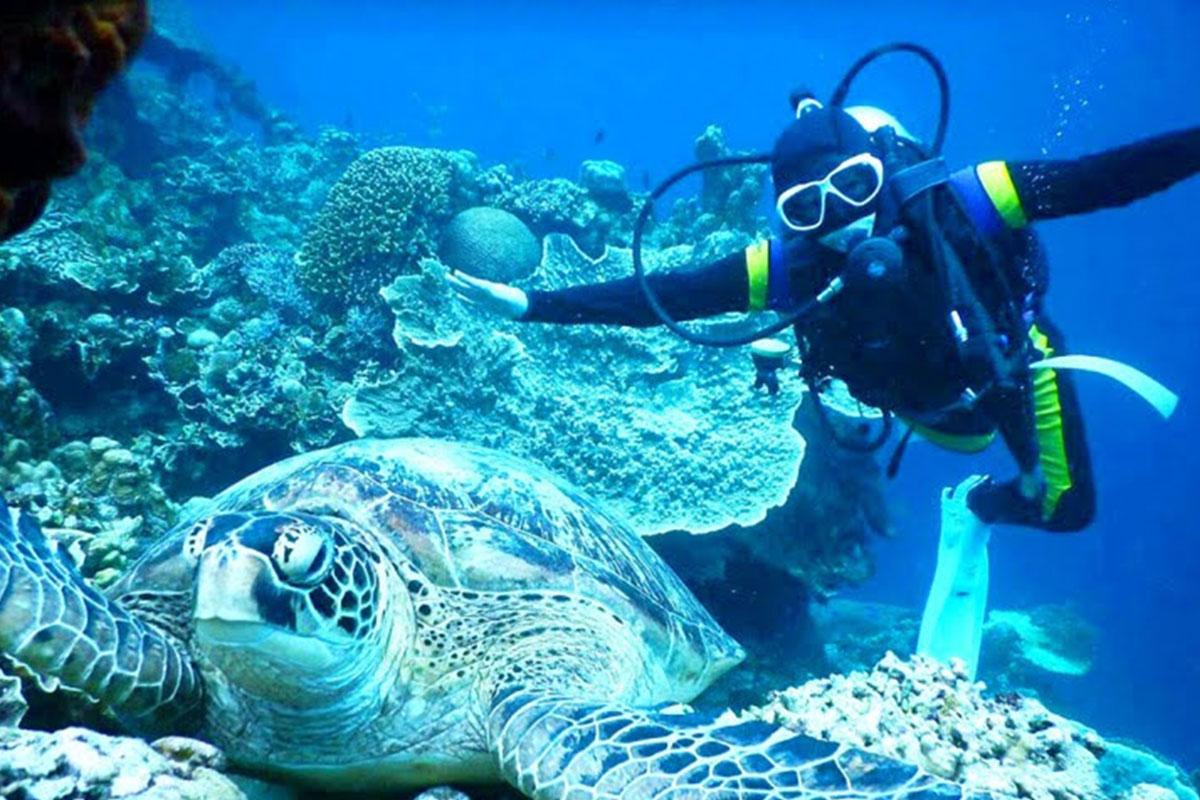 モアルボアルとアパ島で、ウミガメに会うことが出来ます