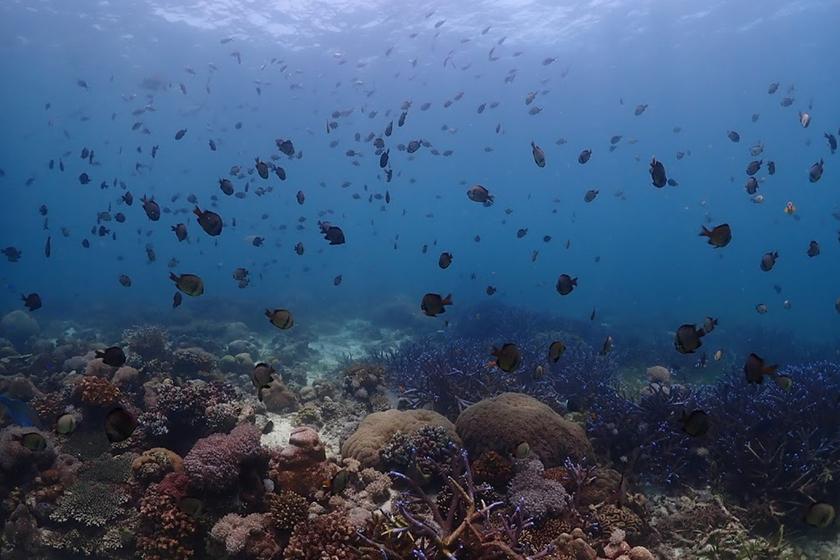 マクタン島の海